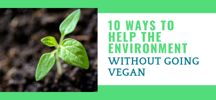 10 Realistic Ways To Save the Environment Without Going Vegan